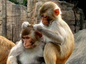 Обнаружено главное отличие человека от обезьяны